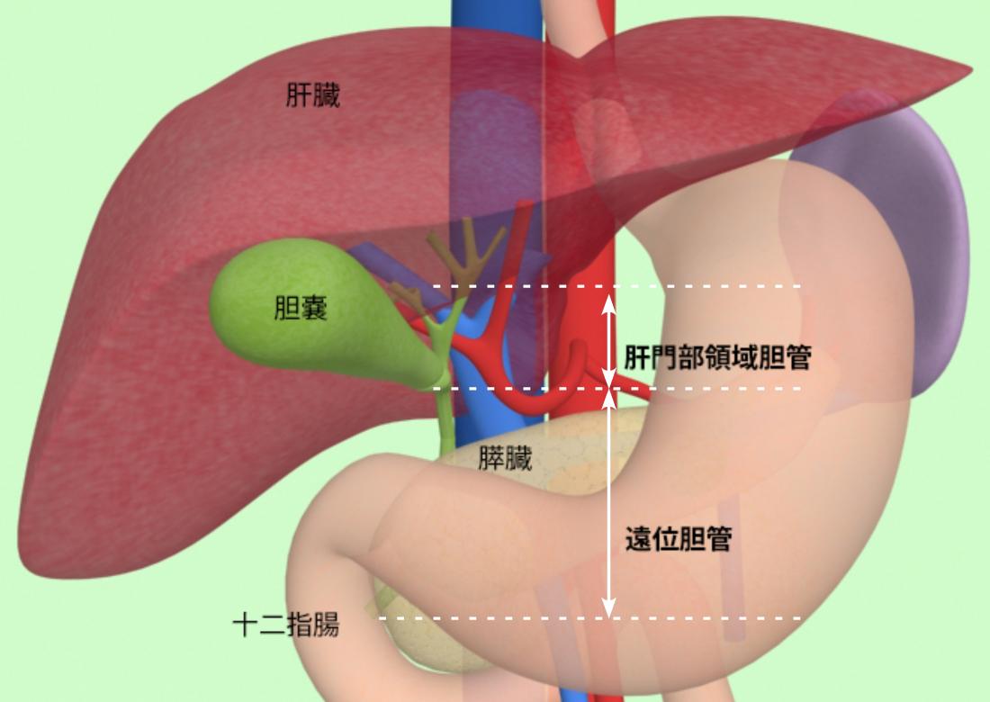 余命 胆管 癌